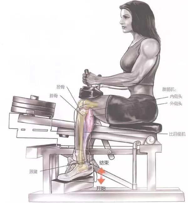 提踵训练,打造小腿肌肉还得靠它!